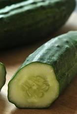 "Squak Mtn Cucumber 'Patio Snacker' 2.5"""