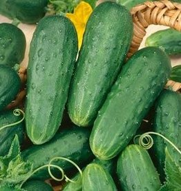 "Squak Mtn Cucumber 'Homemade Pickle' 2.5"""