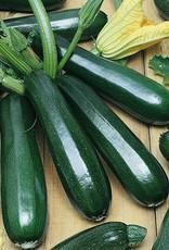 """Squak Mtn Squash 'Zucchini' 2.5"""""""
