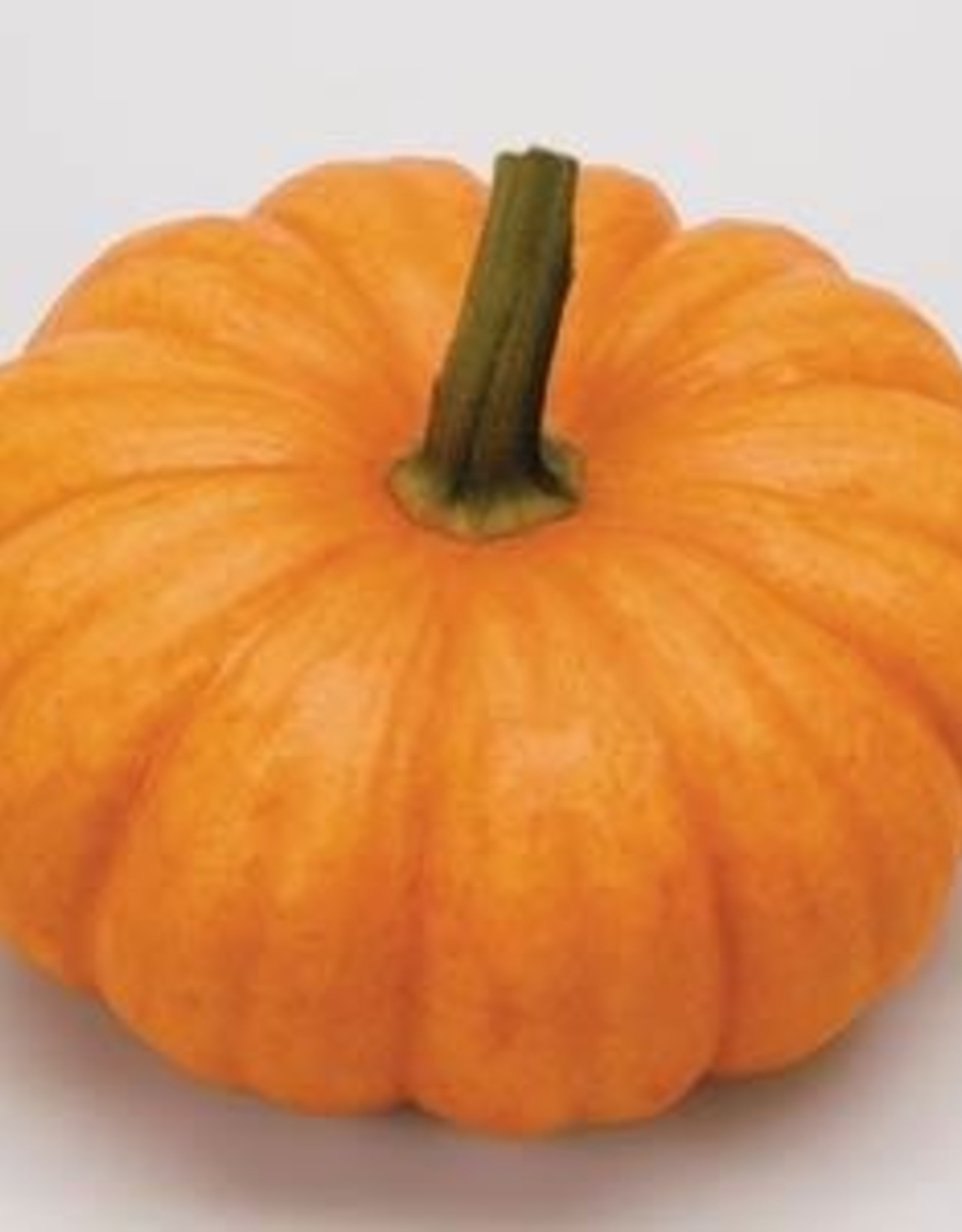 Squak Mtn Pumpkin 'Jack Be Little' 2.5""