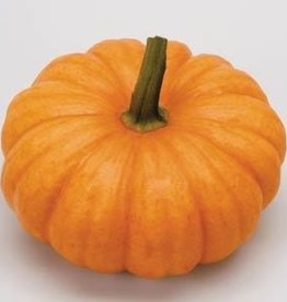 "Squak Mtn Pumpkin 'Jack Be Little' 2.5"""