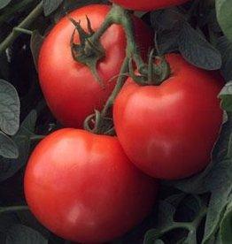 Squak Mtn Tomato 'Early Girl' 1 Gallon