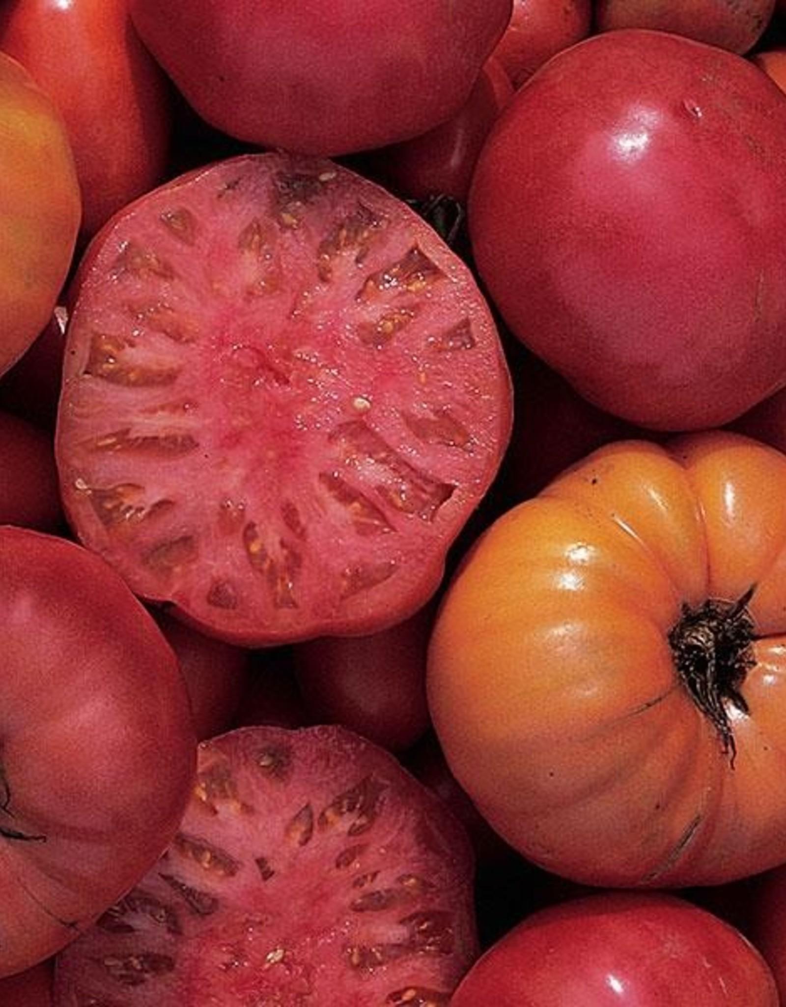 Squak Mtn Tomato Grafted 'Mortgage Lifter' 2 Gallon