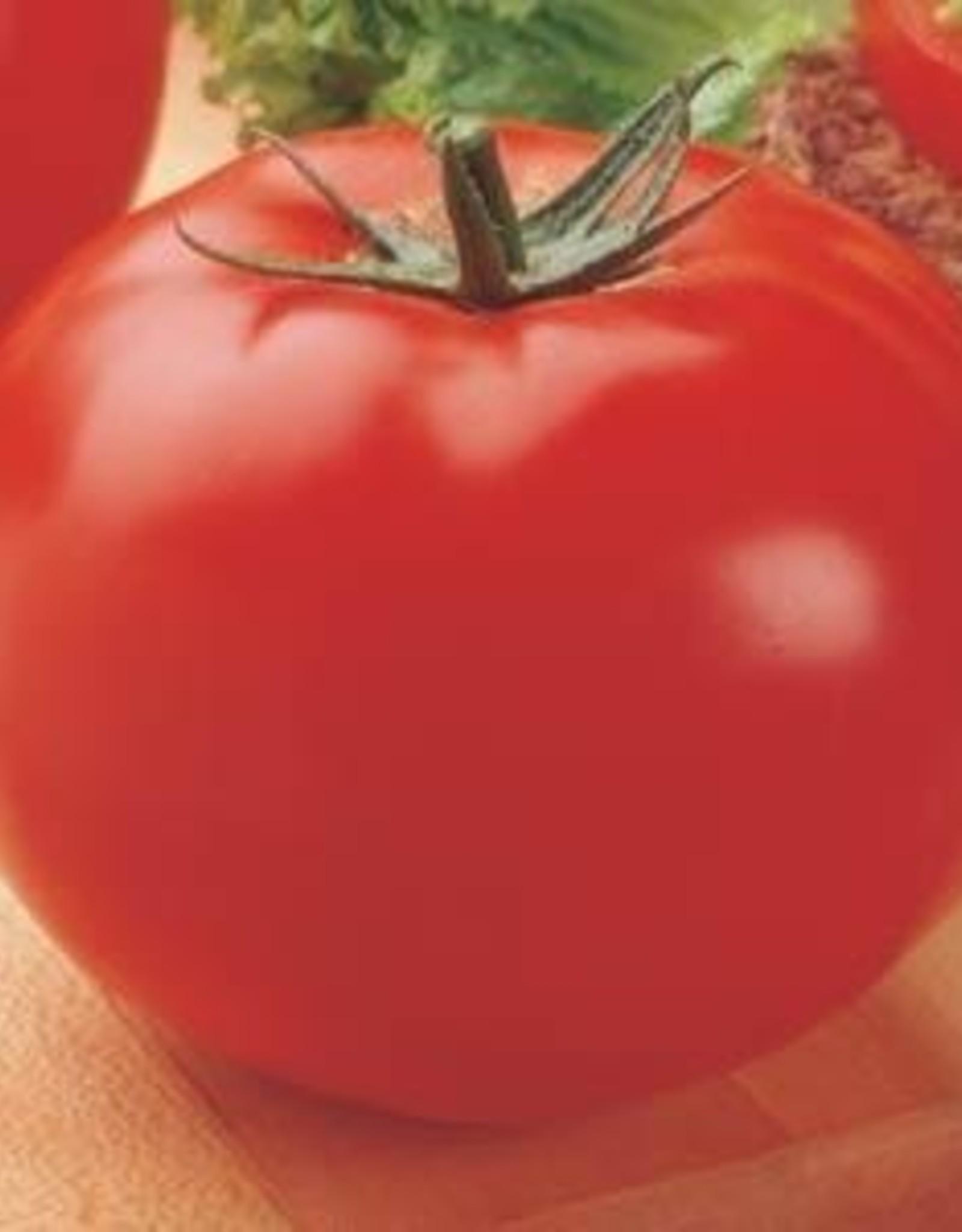 Squak Mtn Tomato Grafted 'Big Beef' 2 Gallon