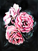 Laura Collins Floral No.1