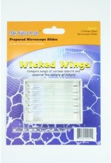 C & A Scientific Prepared Microscope Slides - Wicked Wings