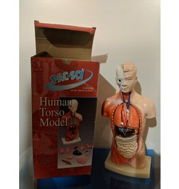 Pacific Science Supplies Inc. Human Torso Model