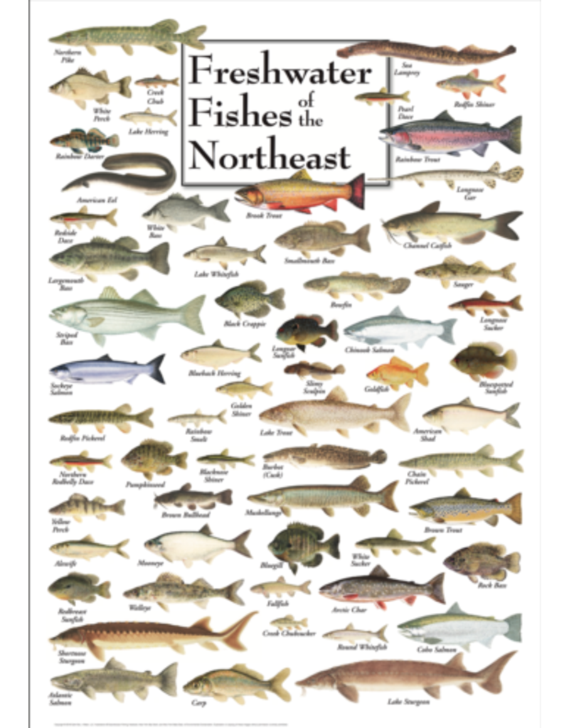 Steven M Lewers and Associates Poster - Freshwater Fishes of the Northeast