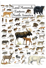 Steven M Lewers and Associates Poster - Land Mammals of Eastern North America