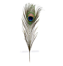 GeoCentral Novelty Peacock Feathers (Sold Individually)