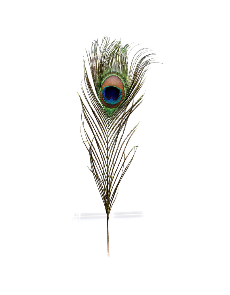 GeoCentral Peacock Feathers (Sold Individually)