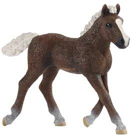 Schleich Schleich Black Forest Foal