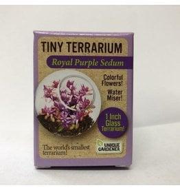 Unique Gardener Tiny Terrarium - Royal Purple Sedum