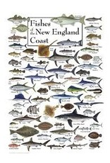 Steven M Lewers and Associates Poster - Fishes of the New England Coast