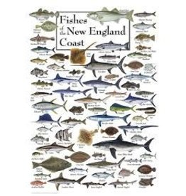 Earth Sea Sky Poster - Fishes of the New England Coast