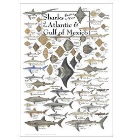 Earth Sea Sky Poster - Sharks, Skates, & Rays of the Atlantic & Gulf of Mexico