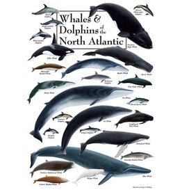 Steven M Lewers and Associates Poster - Whales & Dolphins of the North Atlantic