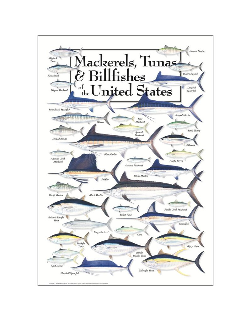 Steven M Lewers and Associates Poster - Mackerels, Tunas & Billfishes of the United States