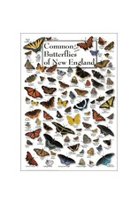 Steven M Lewers and Associates Common & Some Exotic Butterflies of New England
