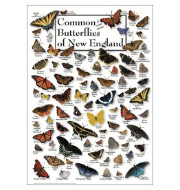 Steven M Lewers and Associates Poster - Common & Some Exotic Butterflies of New England