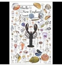 Steven M Lewers and Associates Poster - Shells & Beach Life of the New England Coast