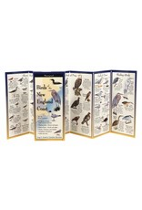 Steven M Lewers and Associates Birds of the New England Coast Folding Guide