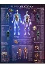 Round world Wall Chart - Human Anatomy Interactive Laminated Wall Chart