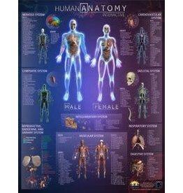 Round world Human Anatomy Interactive Laminated Wall Chart
