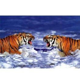 Safari Ltd. Poster - Bengal Tigers Roaring