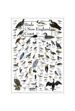 Steven M Lewers and Associates Birds of the New England Coast Poster