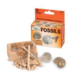 GeoCentral Mini Dig Kit - Fossils (Varies)