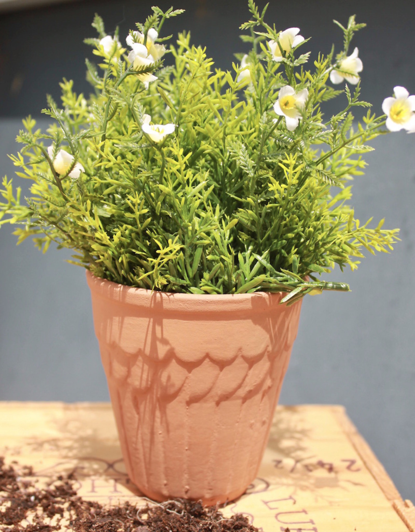 Scalloped Terracotta Pot