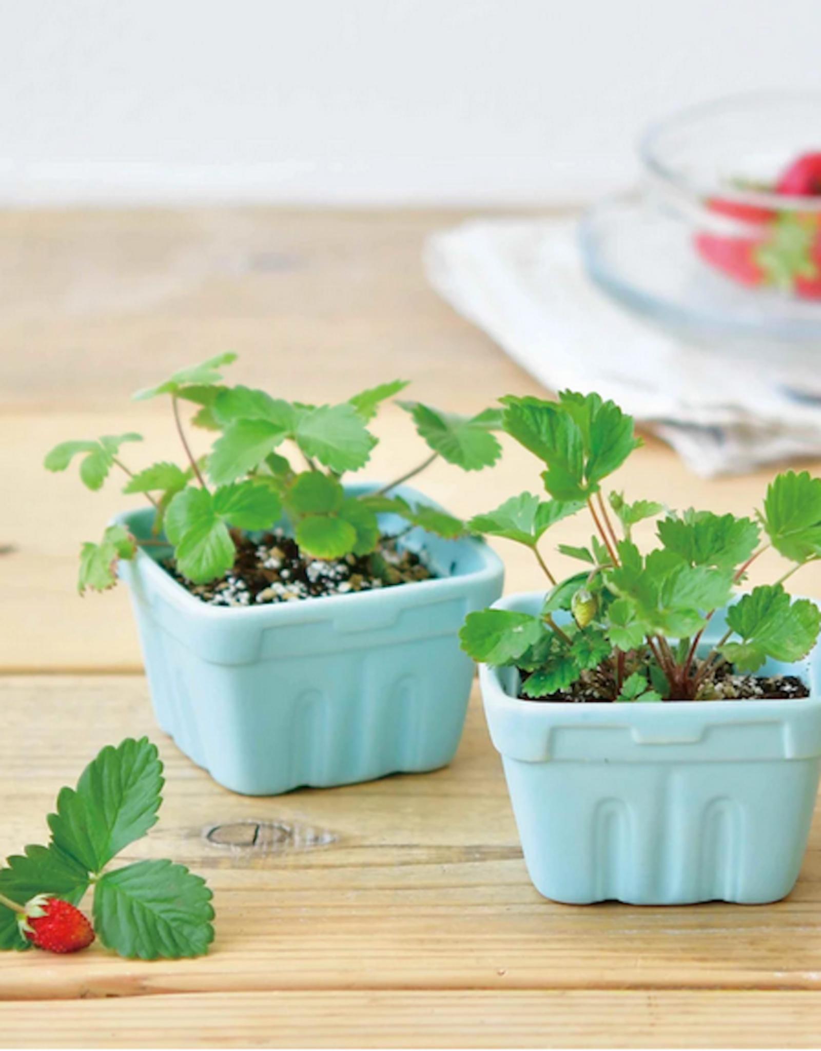 Berry Happy Wild Strawberries