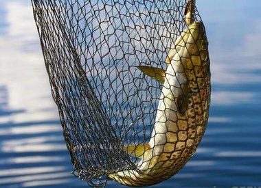 Fish Nets / Buckets