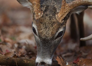 Feed/Attractants