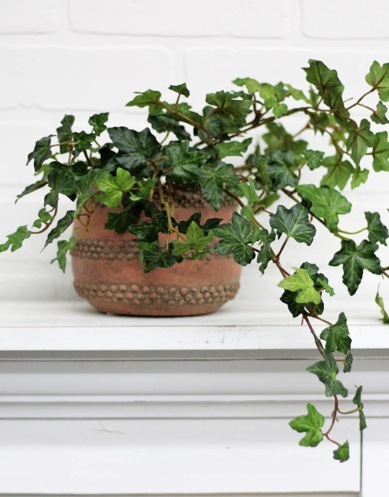 Lace Ivy Vine