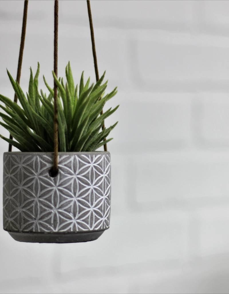 "2.5"" Hanging Modern Daisy Pot"