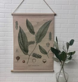Botanical Canvas