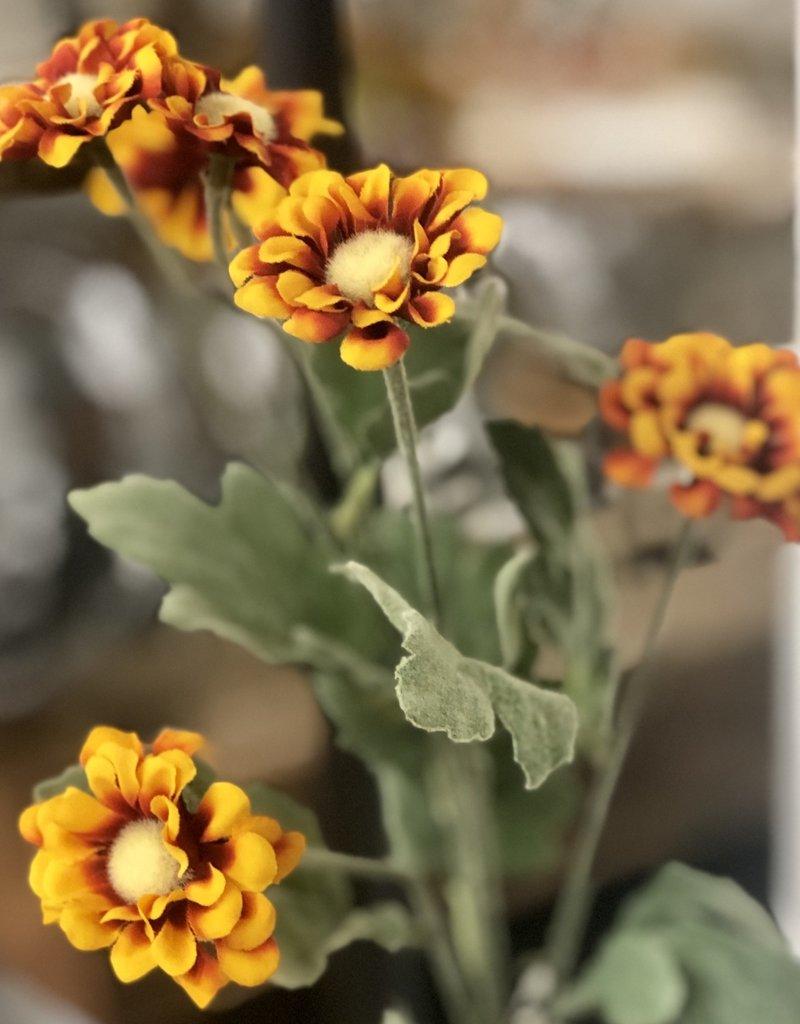 Chrysanthemum Stem