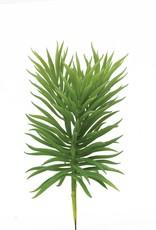 Tasmanian Succulent