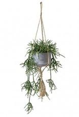 Hanging Succulent in Cement Pot