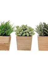 Succulents in square wood pots
