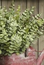 """18"""" Eucalyptus Bundle"""
