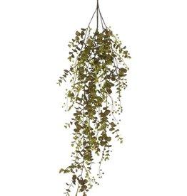Eucalyptus Vine