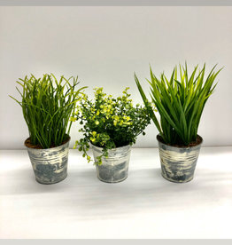 Grass Potted Plants