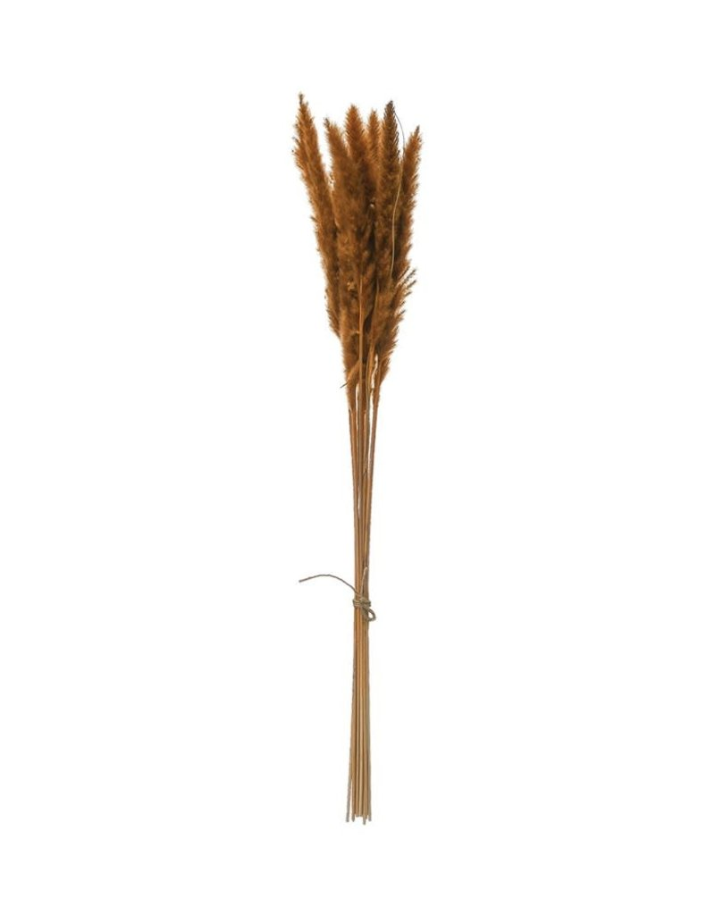 Dried Natural Pampas Grass Bunch (mustard)