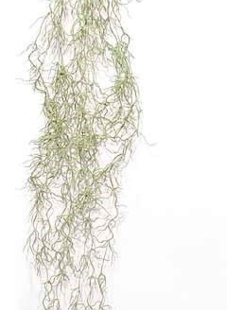 """spanish moss 37.5"""""""
