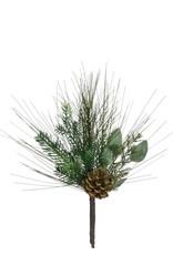 Sugar Pine wild woods pick