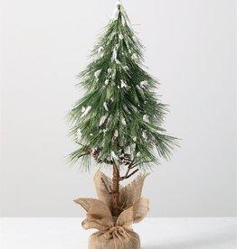 Needle Pine tree