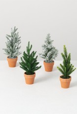 Mini Potted Pine tree